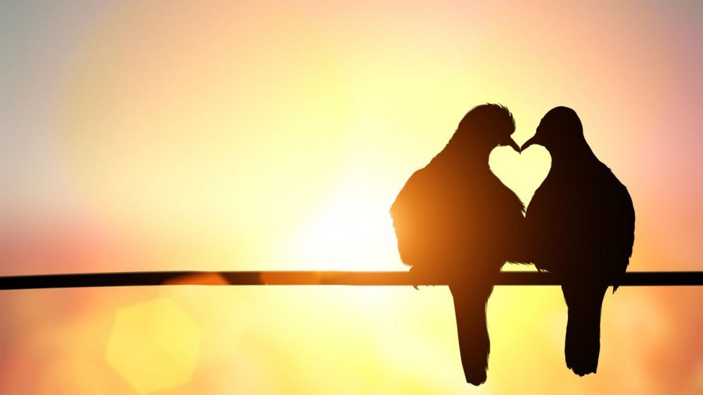 Liebe ist – was ist eigentlich Liebe?